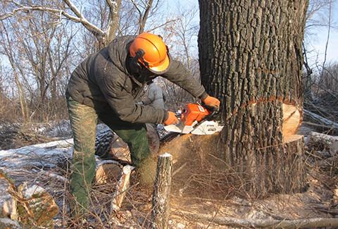 удаление дерева бензопилой